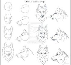 How To Draw A Wolf Head Wolves drawing