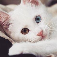 Occhi diversi