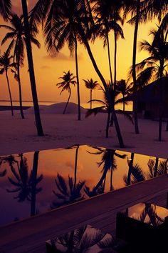 Imagem via We Heart It #beach #iphone #nature #sunset #tree #tumblr #wallpaper