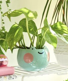 Small Plants, Potted Plants, Plant Pots, Small Succulents, Clay Crafts, Diy Arts And Crafts, Frog Pictures, Cute Frogs, Clay Art