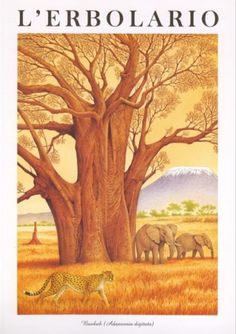 Calendario 1997 L'Erbolario - Acquerelli di Franco Testa