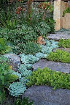 Succulents as ground-cover, in between stepping stones. Brilliant!