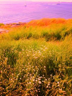 Suomenlinna, Helsinki Helsinki, Mountains, Nature, Plants, Travel, Naturaleza, Viajes, Planters, Trips