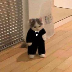 Anime Kitten, Gato Anime, Cute Cat Memes, Funny Cats, Cute Baby Cats, Cute Babies, Baby Animals, Cute Animals, Gatos Cool