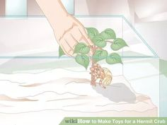 Image titled Make Toys for a Hermit Crab Step 2