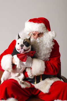 This visit to Santa. | 50 Adorable Reasons That 2013 Was The Year Of The French Bulldog