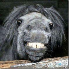 Suprimatec Share: 10 imagens de animais felizes sorrindo!