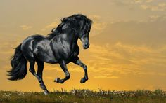 Beautiful Horses Wallpapers Free Download | FREE ALL HD WALLPAPERS