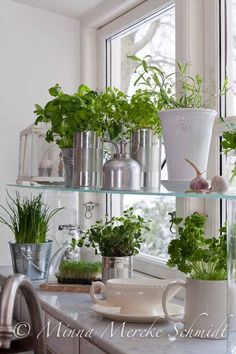 Growing herbs in the