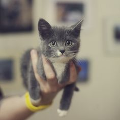 CUTEST KITTEN EVER.   OMG.