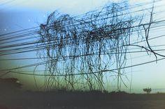 Ліани заплітають електричні дроти  #analoglovers #analogphotography #filmcommunity #filmonly #buyfilmnotmegapixels #thailand #desend #artphotography #art #igersmanila #ig_asia #asia #ig_ukraine Instagram Posts