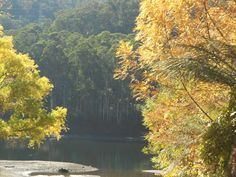 Lake Guy Bogong Village Victoria Australia