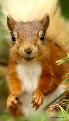 Squirrel and Fox Animals And Pets, Baby Animals, Funny Animals, Cute Animals, Amazing Animals, Animals Beautiful, Woodland Creatures, Woodland Animals, Cute Squirrel