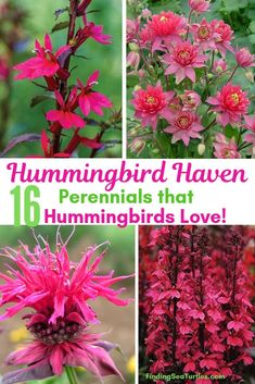 Perennials That Attract Hummingbirds to Your Garden! Hummingbird Haven 16 Perennials That Hummingbirds Love!Hummingbird Haven 16 Perennials That Hummingbirds Love! Shade Perennials, Flowers Perennials, Planting Flowers, Zone 4 Perennials, Flower Gardening, Hummingbird Flowers, Hummingbird Garden, Hummingbird Nectar, Hummingbird Food