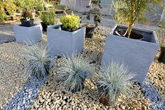 Kompozycja do miejskiego ogrodu w minimalistycznym stylu - rośliny, donice, grys