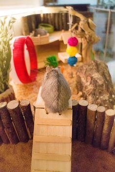 Ikea detolf hamster cage