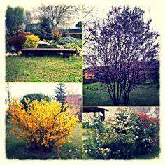 E' arrivata la primavera! Primi colori nel nostro giardino!