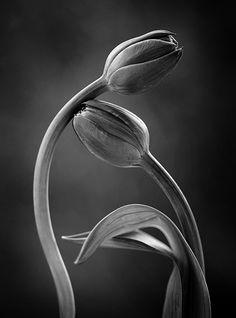 Touch… by Kasia Mycatherina Pietraszko