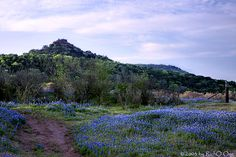 This looks like the Hill Country in Texas