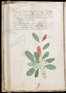 The Voynich Manuscript : Free Download & Streaming : Internet Archive