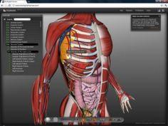 Opcions web per recórrer el cos humà en 3D. Si esteu estudiant el cos humà i voleu aprofitar el que la tecnologia pot fer avui en dia des del navegador, feu un cop d'ull en aquests quatre recursos que ajudaran a entendre diversos conceptes d'anatomia, així com malalties i tractament de les mateixes.    Amb informació d'anatomia, malalties i tractaments. Extremadament professional i complet, existint un plugin per Chrome amb les mateixes funcions que les disponibles en biodigitalhuman.com