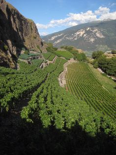 Vineyards in Sion, Switzerland