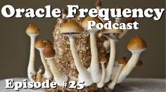 Microdosing Psilocybin Mushrooms & LSD - The Oracle Frequency Podcast #25