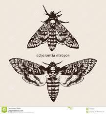 Afbeeldingsresultaat voor hawk moth death head