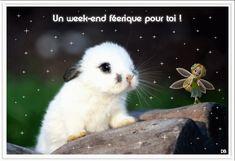 """""""Un week-end féérique pour toi!"""" - Lapinou tendresse..."""