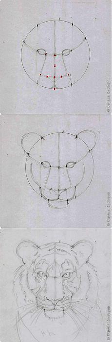 Урок рисования. Голова тигра