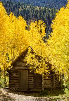 Rocky Mountain cabin in Crystal, Colorado autumn scenery Beautiful World, Beautiful Places, Simply Beautiful, Beautiful Pictures, Cabin In The Woods, Cabins And Cottages, Log Cabins, Mountain Cabins, Mellow Yellow