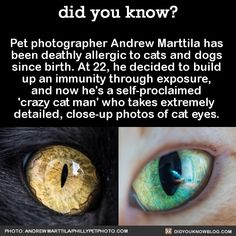 Pet photographer Andrew Marttila has been deathly allergic to cats and dogs since birth. At 22, he decided to build up an immunity through exposure, and now he's a self-proclaimed 'crazy cat man' who takes extremely detailed, close up photos of cat eyes.Source