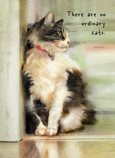 Maine Coon Cat with Colette Quote - by Dianne Woods