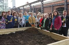 Staff Planting #TuringSunflowers at MOSI Manchester : Tuesday 15 May 2012 | #AlanTuringYear