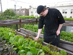 Great blog on rooftop gardens!  Great for small spaces as well as city or apartment-dwellers! The author is brilliant.