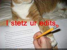 That's my kind of lolcat.