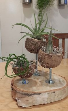 air plants and or succulents maybe baby's breath.  Dirt pods?  Maybe coconut shells