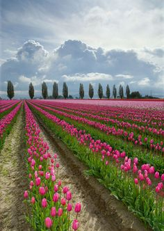 Love the tulips and the clouds in background!