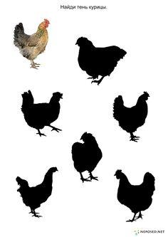Тематический    комплект птичий двор