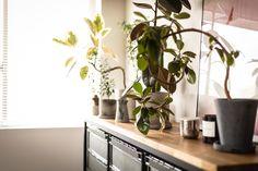 自作の棚の上の観葉植物コーナー。隠すだけでなく、見せる所は美しく見せるセンスはさすがです。#M様邸板橋本町 #観葉植物 #棚 #DIY #インテリア #EcoDeco #エコデコ #リノベーション #renovation #東京 #福岡 #福岡リノベーション #福岡設計事務所 Plants, Plant, Planets