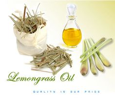Lemongrass ~ The Oil of Cleansing ~ Emotions Addressed:  Toxic or Negative Energy, Darkness, Despair Holding on to the Past, Hoarding and Spiritual Blindness.    Suggested Uses:  1-3 drops over kidneys.  Inhale regularly throughout the day.  Place 10 drops into a spray bottle and mist around the room.
