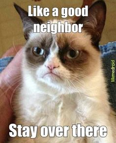 Have I ever mentioned how much I LOVE Tard the grumpy cat?! XP anim, grumpi cattardar, cattardar sauc, funni stuff, laugh, grumpy cat neighbor, tard the grumpy cat, humor, grumpy cats