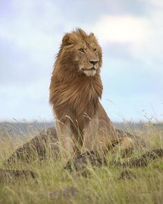 THE KING!! Something went terribly wrong in this world, he should have been still the king of ALL animals, including the humans which are also animals