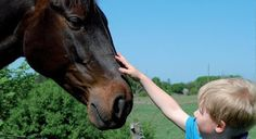 Ξεναγός - Google+ Horses, Animals, Sign, Google, Animales, Animaux, Animal, Signs, Animais