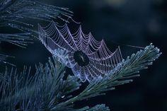 #spiders #webs