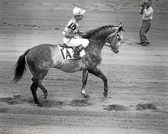Legacy of the 'Grey Ghost': Native Dancer never lost at Saratoga