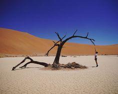 . . . . . #favourite #tree #hiddenvlei #sossusvlei #deadvlei #namibia #namib #namibia #toer #avontuur #travel #instagood #instadaily #instalike #vakansie  @lande_vz Insta Like, Travel, Instagram, Viajes, Destinations, Traveling, Trips