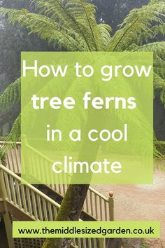 How to grow tree ferns in a cool cliimate such as the UK or Northern Europe/North America. How to over winter tree ferns, grow tree ferns in containers and when you need to prune a tree fern. Ferns Garden, Garden Trees, Trees To Plant, Indoor Gardening Supplies, Container Gardening, Growing Tree, Growing Plants, Garden Renovation Ideas, Tree Fern
