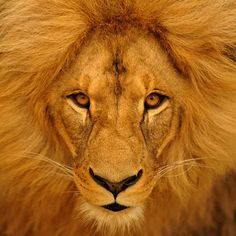 """""""Do you think I care if Aslan doomes me to death?"""" said the King. """"That would be nothing, nothing at all. Would it not be better to be dead than to have this horrible fear that Aslan has come and is not like the Aslan we have believed in and longed for? It is as if the sun rose one day and were a black sun.""""  ― C.S. Lewis, The Last Battle"""