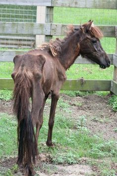 Judge Rejects Animal Cruelty Charge against Owner of Abused Horse: Ridiculous. When you see these animals and what they should look like, and then there's this, you should know charges are only appropriate.
